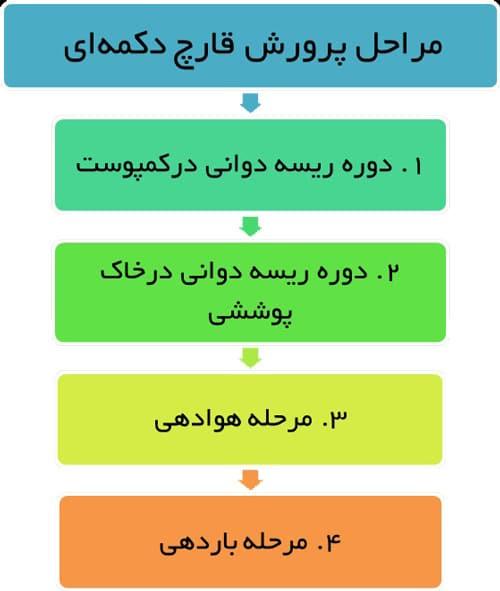 مراحل رشد قارچ دکمه ای-آمیار24